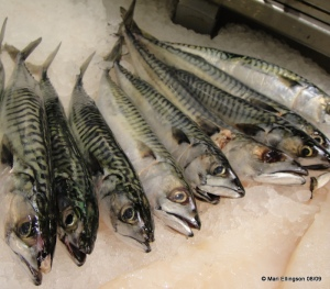 Mackeral - small in size but big in taste...